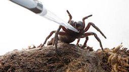 Quá bất ngờ: Nọc độc nhện có thể diệt trừ ung thư