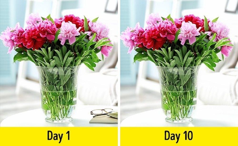 Tận dụng dấm làm những việc hữu ích trong nhà của bạn