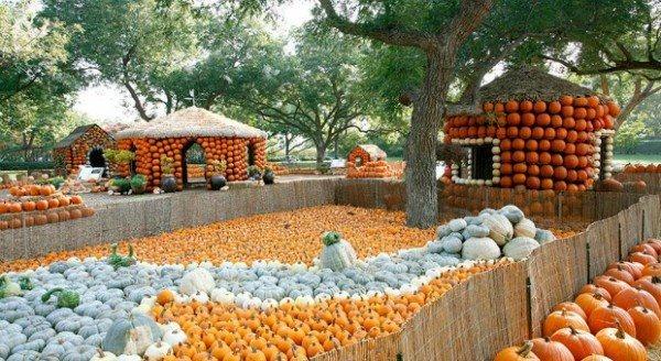 Ngôi làng bí ngô – nơi cả thế giới muốn đến vào ngày Halloween