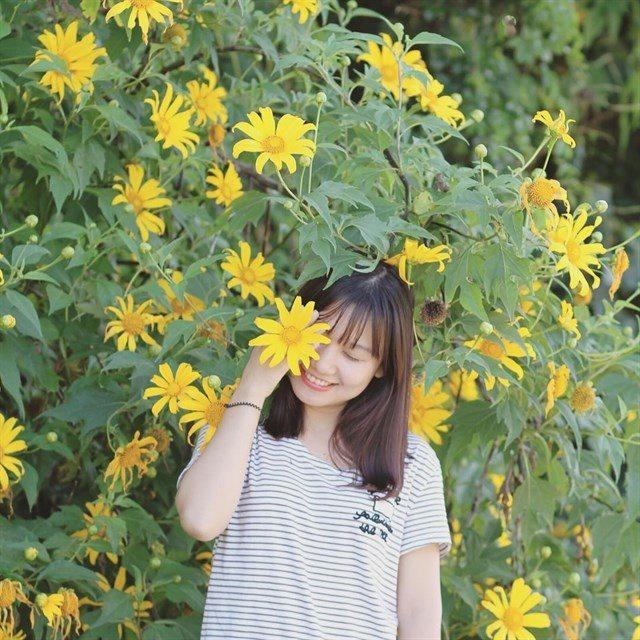 Tháng 11 đừng bỏ lỡ mùa hoa vàng Ba Vì
