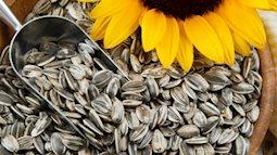 Hạt hướng dương mang lại lợi ích sức khỏe phi thường