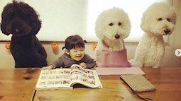 Bật cười trước hình ảnh em bé làm nũng bên những chú chó siêu đáng yêu