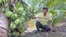 Đổi đời nhờ vườn dừa có mùi thơm như lá dứa, trái chi chít