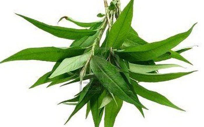 Tác dụng chữa bệnh của cây rau răm không phải ai cũng biết