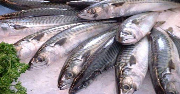 Giúp bà nội trợ cách phân biệt cá biển tươi và cá biển chứa chất độc hại