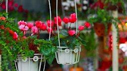 Trồng 5 loài hoa này trong nhà đảm bảo ruồi muỗi không dám bén mảng đến