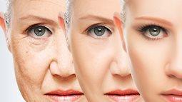Cơ thể con người bắt đầu lão hóa từ tuổi 40