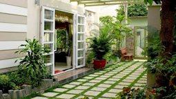 Thư giãn tại nhà bằng việc trồng cây xanh