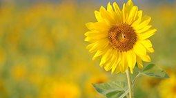 Cuối năm trồng những loại hoa này để hóa giải vận đen của năm cũ