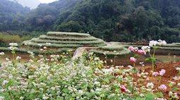 Ngắm hoa tam giác mạch giữa lòng di sản Tràng An