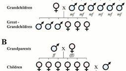 Sinh con trai hay con gái phụ thuộc vào gen của người cha