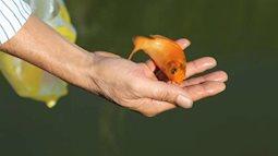 Thả cá chép tiễn ông Công ông Táo về trời thế nào cho đúng cách?