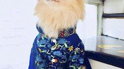 Bạn nghĩ gì khi nhiều người sắm áo dài sành điệu cho thú cưng diện Tết?