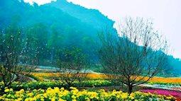 Rực rỡ hương sắc ở thung lũng hoa Bái Đính – Ninh Bình