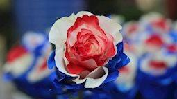 Chen nhau mua hoa hồng tam sắc tặng người yêu dịp Valentine