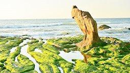 Mê mẩn du xuân với những phiến đá phủ rêu xanh mướt ở bãi rạn Nam Ô