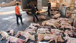 Mẹ nội trợ tẩy chay thịt lợn vì sợ dịch tả từ châu Phi