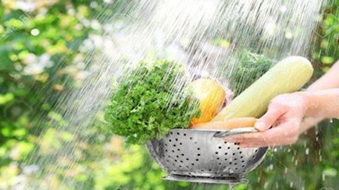 5 điều phải nhớ khi rửa rau để loại bỏ thuốc trừ sâu