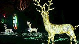 """Check-in ngay """"Khu vườn ánh sáng"""" ảo diệu tại Hà Nội"""