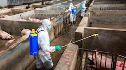 Trung Quốc đã kiểm soát dịch tả lợn châu Phi trên toàn quốc như thế nào?