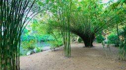 Tuyệt đẹp rừng tre trúc ở Sơn Trà Tịnh Viên