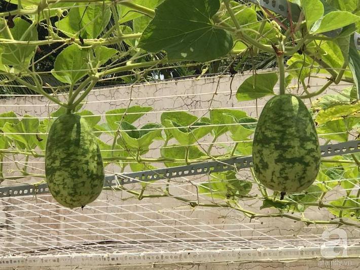 Khu vườn 100m² rau quả gì cũng có của mẹ đảm hai con xinh đẹp ở Sóc Trăng - Ảnh 18.