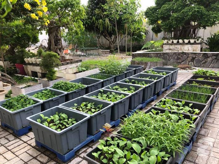 Khu vườn 100m² rau quả gì cũng có của mẹ đảm hai con xinh đẹp ở Sóc Trăng - Ảnh 1.