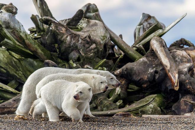 Loạt ảnh thiên nhiên đạt giải thưởng của Viện hàn lâm California: Chứa đựng cuộc sống hoang dã tàn khốc mà cảm động - Ảnh 1.