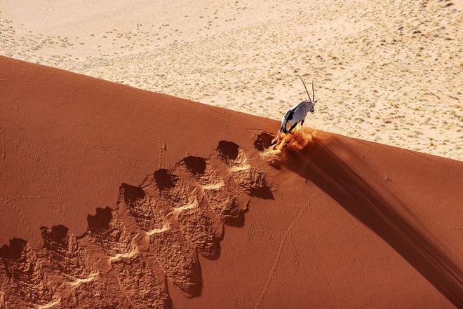 Loạt ảnh thiên nhiên đạt giải thưởng của Viện hàn lâm California: Chứa đựng cuộc sống hoang dã tàn khốc mà cảm động - Ảnh 4.