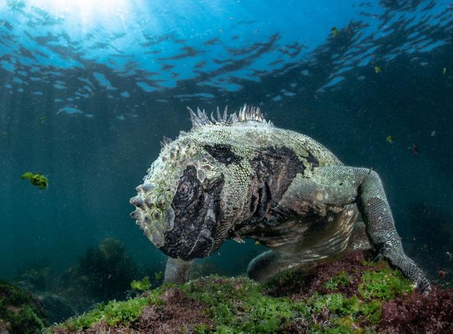 Loạt ảnh thiên nhiên đạt giải thưởng của Viện hàn lâm California: Chứa đựng cuộc sống hoang dã tàn khốc mà cảm động - Ảnh 7.