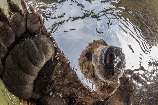 Loạt ảnh thiên nhiên đạt giải thưởng của Viện hàn lâm California: Chứa đựng cuộc sống hoang dã tàn khốc mà cảm động - Ảnh 8.