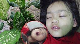 Bé gái 4 tuổi bị co giật, sưng môi, nguy hiểm tính mạng vì cắn phải lá của loại cây mà hầu như nhà nào cũng trồng trong nhà