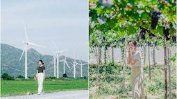 """Cánh đồng quạt gió và vườn nho Ba Mọi tại Ninh Thuận: Hai địa điểm check-in """"siêu to khổng lồ"""", lại còn miễn phí nữa chứ!"""