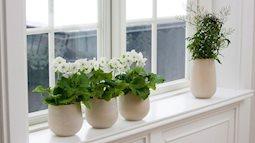 Những cách trang trí cửa sổ đơn giản mà đẹp bất ngờ không phải ai cũng biết