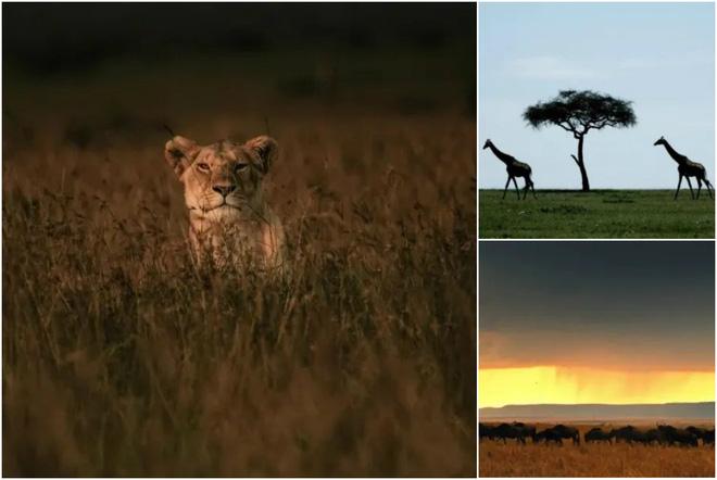 """Khui ngay loạt tọa độ có thật trong siêu phẩm """"The Lion King"""" 2019: Toàn cảnh đẹp thiên nhiên hoành tráng bậc nhất thế giới! - Ảnh 4."""