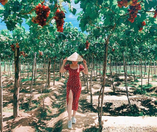 """Tháng 9 đổi gió """"săn nho"""" tại 2 khu vườn nổi tiếng nhất Ninh Thuận để lúc đi có hình sống ảo, lúc về có nho ăn! - Ảnh 2."""