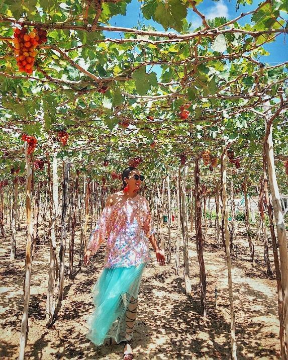 """Tháng 9 đổi gió """"săn nho"""" tại 2 khu vườn nổi tiếng nhất Ninh Thuận để lúc đi có hình sống ảo, lúc về có nho ăn! - Ảnh 15."""