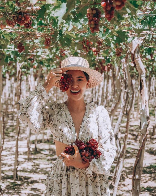 """Tháng 9 đổi gió """"săn nho"""" tại 2 khu vườn nổi tiếng nhất Ninh Thuận để lúc đi có hình sống ảo, lúc về có nho ăn! - Ảnh 18."""