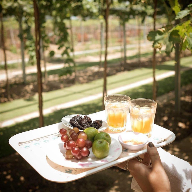 """Tháng 9 đổi gió """"săn nho"""" tại 2 khu vườn nổi tiếng nhất Ninh Thuận để lúc đi có hình sống ảo, lúc về có nho ăn! - Ảnh 4."""