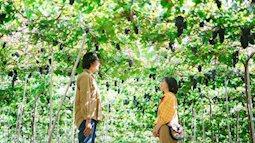 """Tháng 9 đổi gió """"săn nho"""" tại 2 khu vườn nổi tiếng nhất Ninh Thuận để lúc đi có hình sống ảo, lúc về có nho ăn!"""