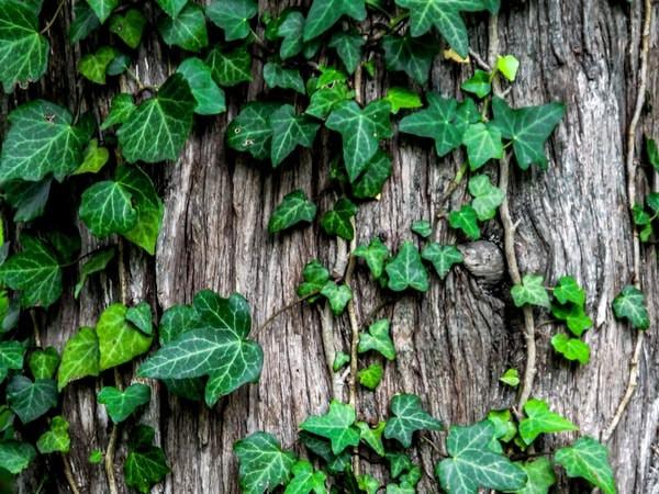 8 loại cây nên trồng trong nhà để thanh lọc, làm sạch không khí - Ảnh 2.