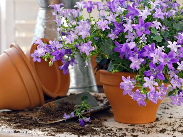 8 loại cây nên trồng trong nhà để thanh lọc, làm sạch không khí - Ảnh 6.