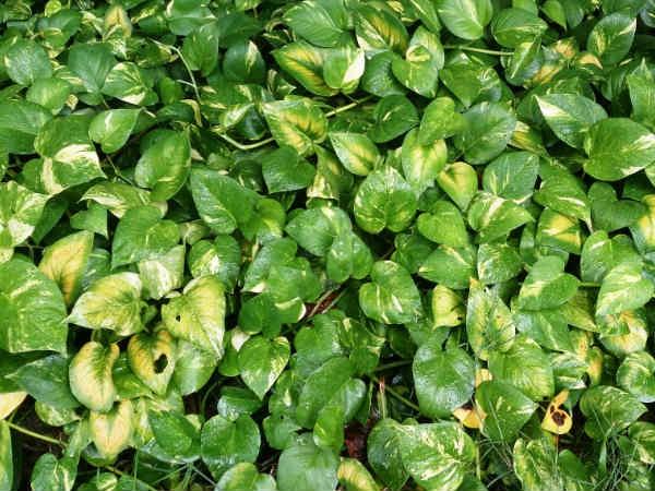 8 loại cây nên trồng trong nhà để thanh lọc, làm sạch không khí - Ảnh 8.