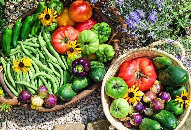 Gặp cô giáo xinh đẹp yêu làm vườn, thích nấu ăn và giấc mơ được trồng rau quả sạch suốt cuộc đời - Ảnh 16.