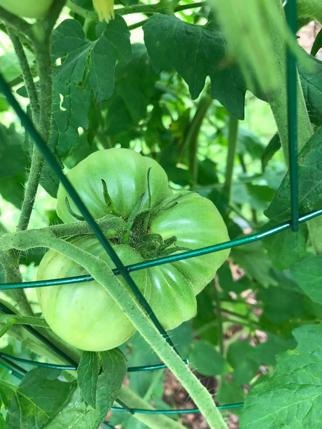 Gặp cô giáo xinh đẹp yêu làm vườn, thích nấu ăn và giấc mơ được trồng rau quả sạch suốt cuộc đời - Ảnh 17.