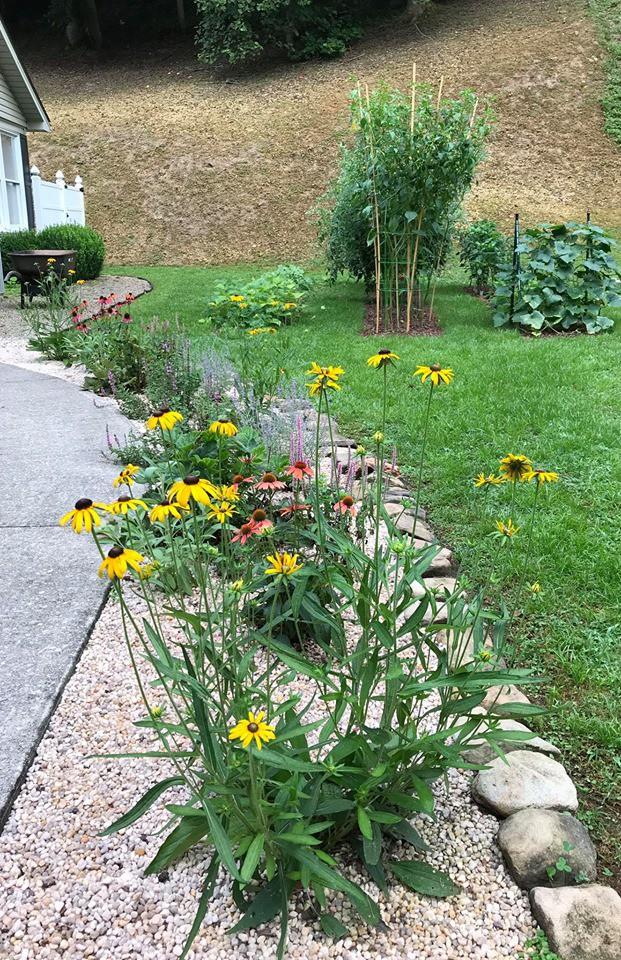 Gặp cô giáo xinh đẹp yêu làm vườn, thích nấu ăn và giấc mơ được trồng rau quả sạch suốt cuộc đời - Ảnh 19.