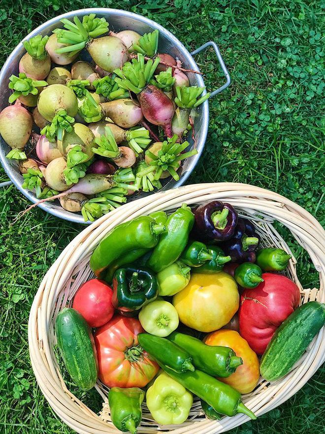 Gặp cô giáo xinh đẹp yêu làm vườn, thích nấu ăn và giấc mơ được trồng rau quả sạch suốt cuộc đời - Ảnh 3.