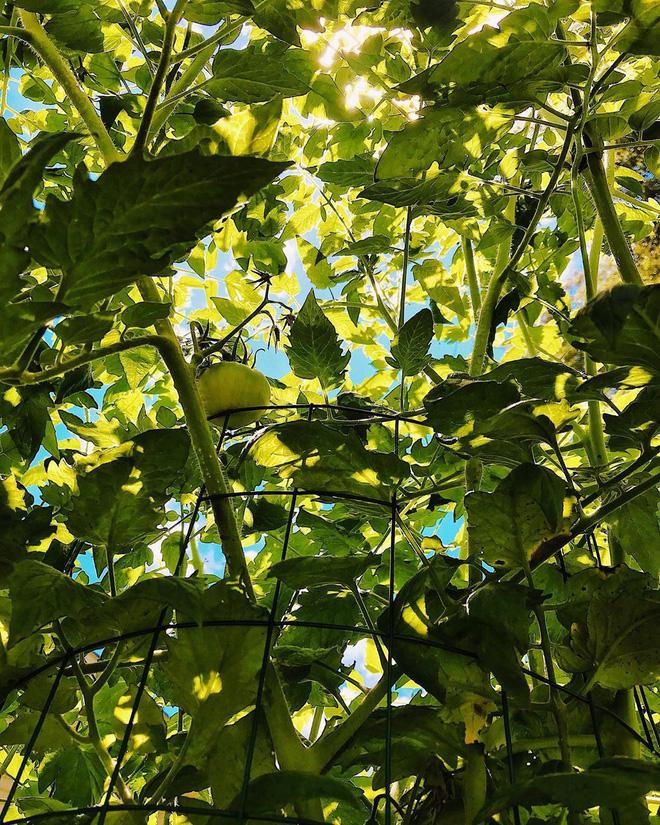 Gặp cô giáo xinh đẹp yêu làm vườn, thích nấu ăn và giấc mơ được trồng rau quả sạch suốt cuộc đời - Ảnh 29.