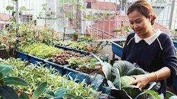 Kinh nghiệm trồng rau quả tốt tươi, bội thu trên sân thượng của mẹ đảm ở Hà Nội