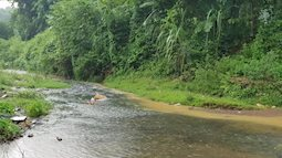 Dân Hà Nội khốn khổ vì nước có mùi lạ: Do chất thải từ đầu nguồn nước sông Đà?